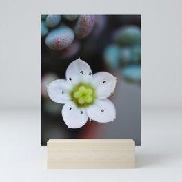 Petite Petals Mini Art Print