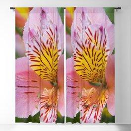 Pink and yellow flora Blackout Curtain