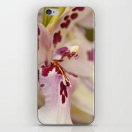 Cambria 5-8022 iPhone Skin