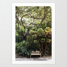 The Reading Bench & The Croton Tree Art Print