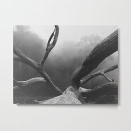 That SF Tree in Black and White Metal Print