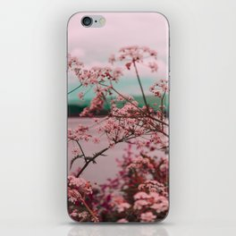 Pink Baby's Breath White Pink Blossoms Against Turquoise Background iPhone Skin