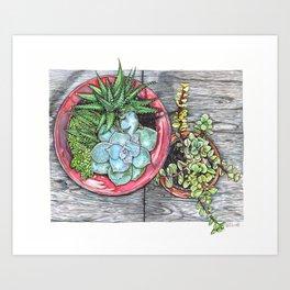 Succulent I Art Print