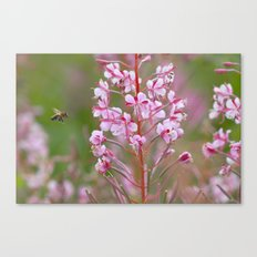 Fireweed 3990 Canvas Print