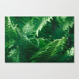 Macro photography of a fern in a tropical forest. Nature background. Canvas Print