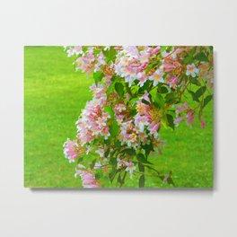 Cherry Blossems Metal Print