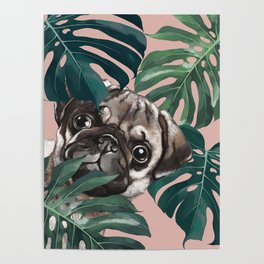 Pug with Monstera Leaf Poster