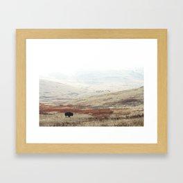 Lone Bison on The National Bison Range in Montana Framed Art Print