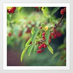 Red Tree Berries Art Print