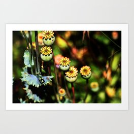 Poppy Flowers Pods Art Print
