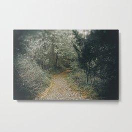Autumn Path Through the Woods Metal Print
