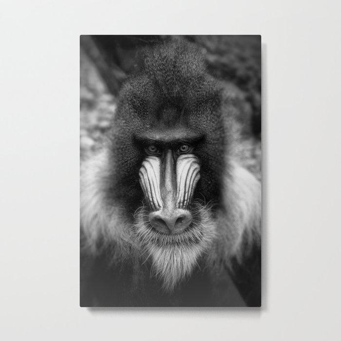 King Monkey Metal Print
