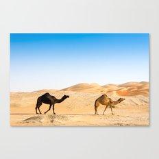 camels Canvas Print