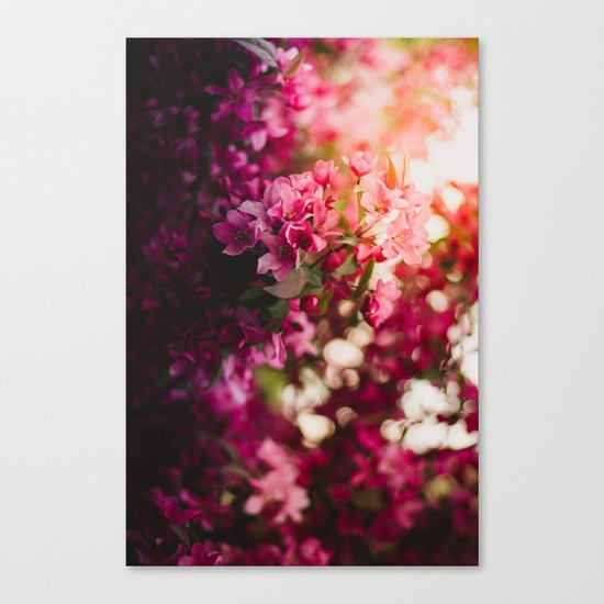 Beauty of Spring II Canvas Print