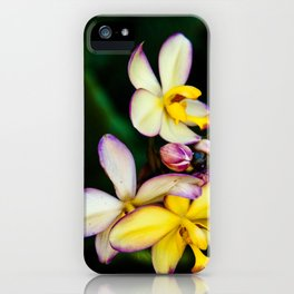 Pretty Plumeria, Hawaii's Flower iPhone Case