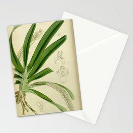 Flower 4782 angraecum pertusum Perforated Angraecum1 Stationery Cards