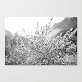 Flowering Plant Canvas Print