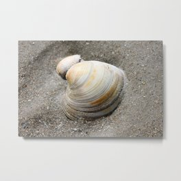 Shell in the Sand Metal Print