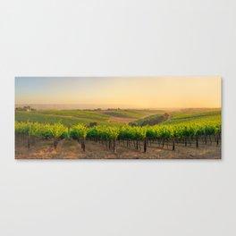 Golden Vineyard  panorama Canvas Print