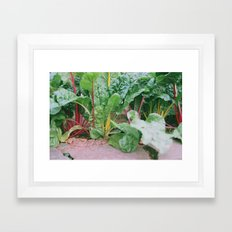 Rainbow Chard Framed Art Print
