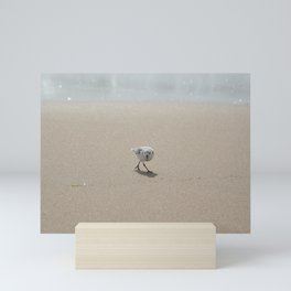 Sandpiper bird Mini Art Print