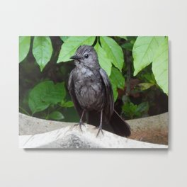 Wet catbird Metal Print
