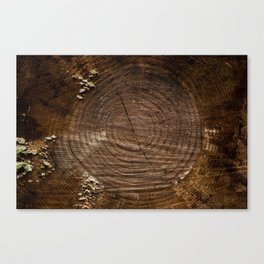 Tree Trunk with Moss Canvas Print
