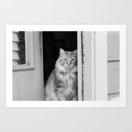 Doorway Cat 2 Art Print