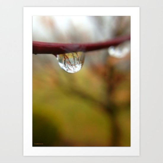 Tree Reflected in a Raindrop Art Print
