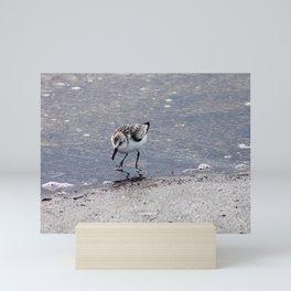 Sandpiper Mini Art Print