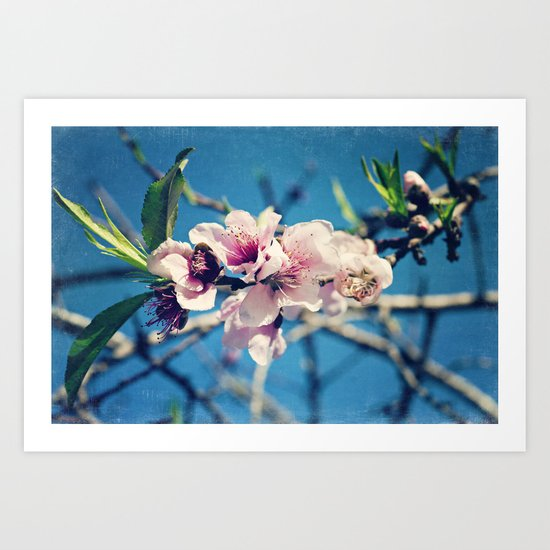 Nectarine Blossoms Art Print