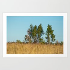 Birches in the golden field 450 Art Print
