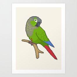 Pixel / 8-bit Parrot: Green-cheek Conure Art Print