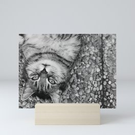 Cat Satisfied Mini Art Print