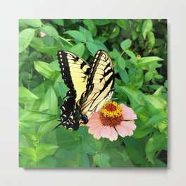Butterfly on Zinnia 4 Metal Print