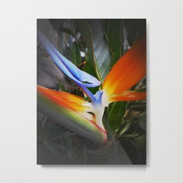 Bird of Paradise- Macro-up close and personal Metal Print