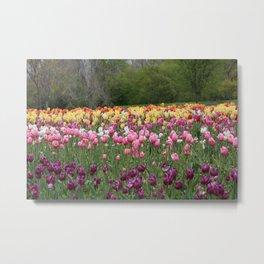 Field of Tulips Metal Print