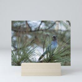 Steller's Jay, No. 1 Mini Art Print