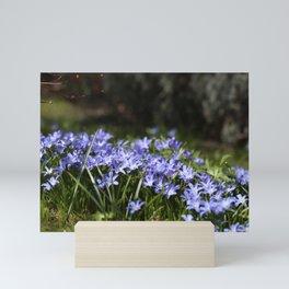 Blue Scilla Mini Art Print