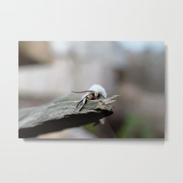 White Moth on a Piece of Wood Metal Print