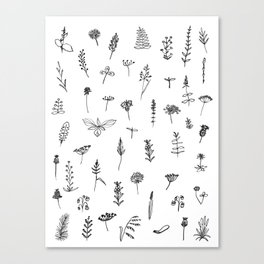 Wild plants Canvas Print