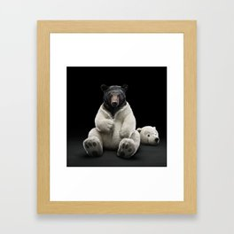 Black bear wearing polar bear costume Framed Art Print