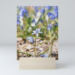 Scilla Siberica Mini Art Print
