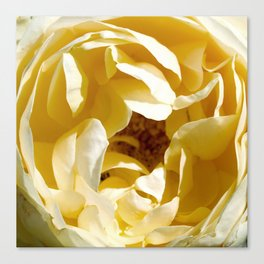 Closeup of Yellow Flower Canvas Print
