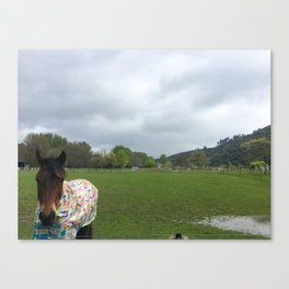 Stormy Day Horse Canvas Print