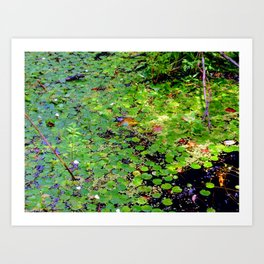 Lonely frog Art Print