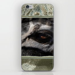zee-brah' iPhone Skin