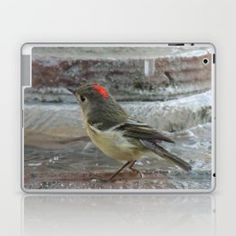 Ruby-Crowned Kinglet At The Fountain Laptop & iPad Skin