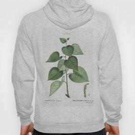 Robinia caragana from Traite des Arbres et Arbustes que lon cultive en France en pleine terre (1801- Hoody