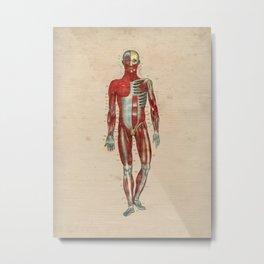 Human Muscle Anatomy 1841 Print Metal Print
